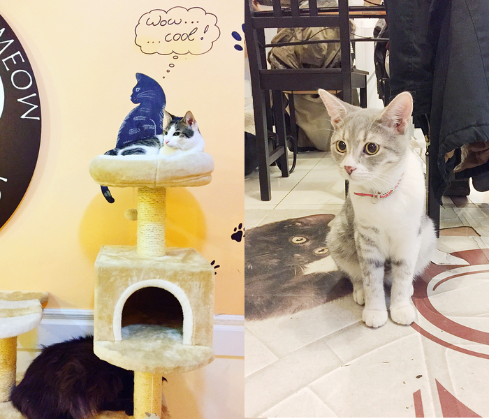 boedapest hotspots hongarije budapest cat cafe