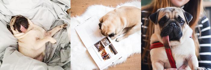 archiestaste favoriete Instagram-accounts