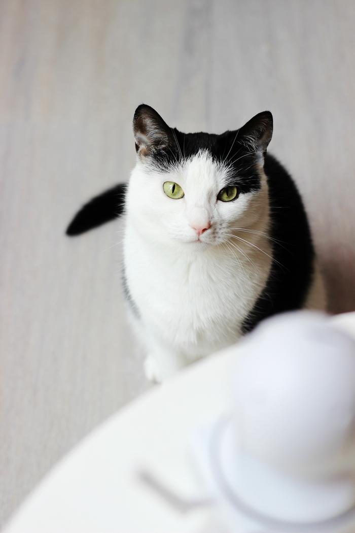 sannce home security ip camera review bewakingscamera voor huisdieren