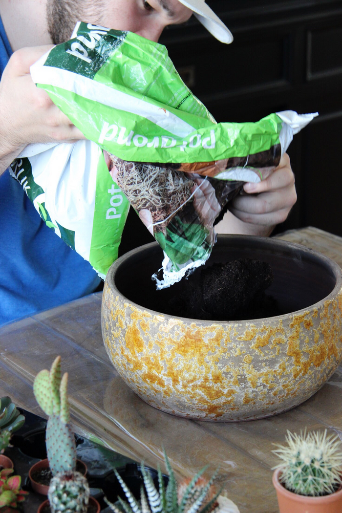 cactussentuin maken diy cactussen in pot interieur