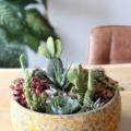 cactussentuin maken diy cactussen in pot interieur