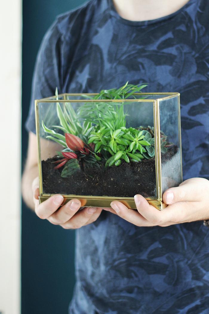 DIY cactussen en vetplanten interieur cactus vetplant tips kratje houten kratje planten terrarium DIY's met cactussen en vetplanten