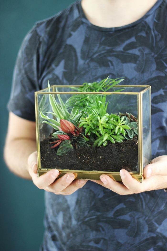 DIY cactussen en vetplanten interieur cactus vetplant tips kratje houten kratje planten terrarium