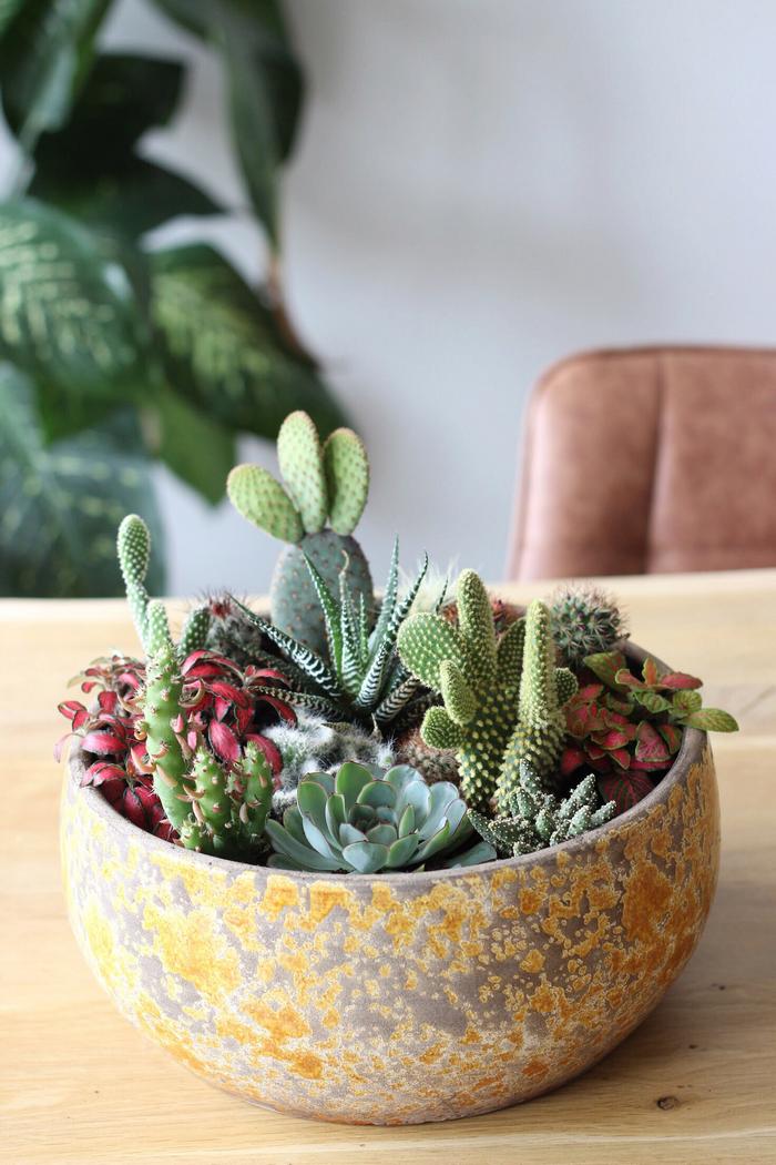DIY cactussen en vetplanten interieur cactus vetplant tips kratje houten kratje planten terrarium cactussentuin