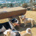 Hike Runyon Canyon with a rescue dog airbnbn experience review
