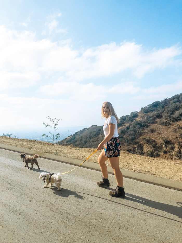 hike runyon canyon with a rescue dog airbnb experience